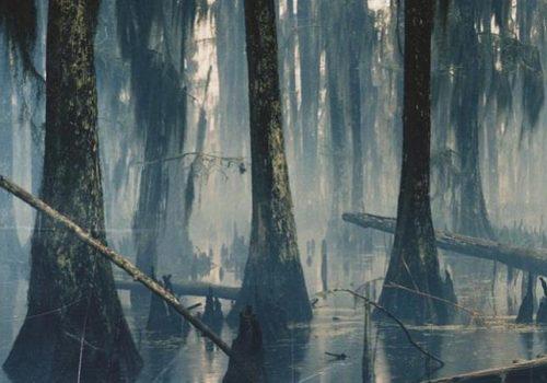 "William Faulkner: ""Divlje palme""_61492de6027d5.jpeg"