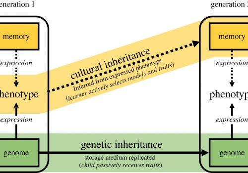 Kultura kao motor biološke evolucije ljudi_60cc0e1011ab5.jpeg