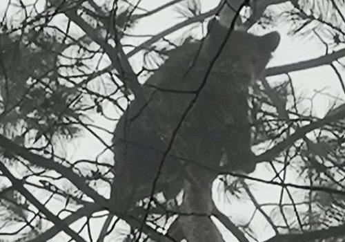 Mladunci medvjeda u blizini centra grada_602e7a498db4b.jpeg