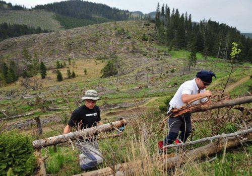 Posljednji čin europskog ponosa: masovno krčenje šuma_60fb8408a7552.jpeg
