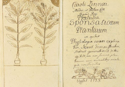 Ilustracija: Karl Line, 1729.