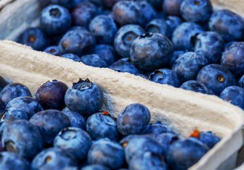 U Plavu počinju Dani borovnice_60eee76d4e6ac.jpeg
